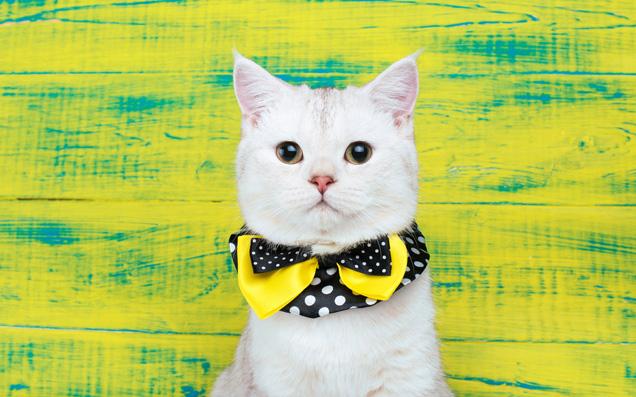 だって猫が好き!日常でさりげなく取り入れたい癒しの「猫モチーフ」コスメたち
