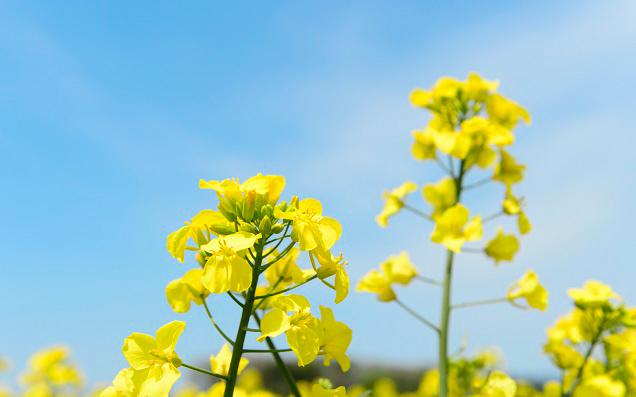 桜だけじゃない!藤、菜の花、蕎麦の花まで...日本全国のいろんな花見の名所