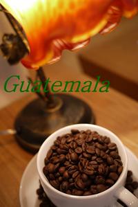 グァテマラ アンティグア アゾテア農園 400g