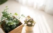 なぜ枯れる?原因を知り、観葉植物を上手に育てよう
