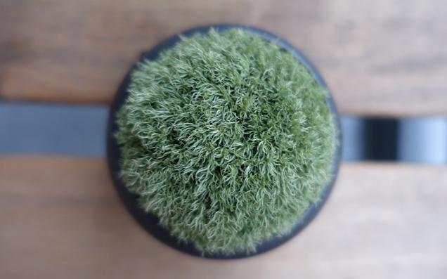 お部屋にグリーンを! お手入れ簡単な苔インテリアで癒やされてみない?