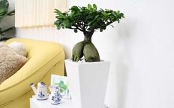 観葉植物で癒しの部屋づくり