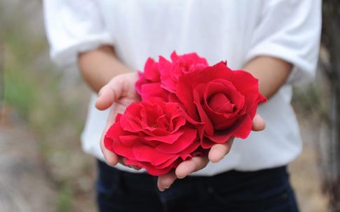 真っ赤な大きな花を咲かせる『さ姫』。一輪分の花冠には、30枚近くもの花びらが。