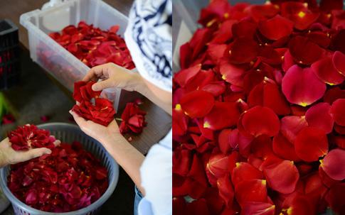 花びらの仕分け作業の風景(写真左)。一枚一枚、人の手と目を使って行われます。仕分けされた花びら(写真右)。花びらの肉厚さも、さ姫の特徴のひとつ。