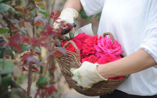 花屋さんだからこそつくれた、朝摘みのバラが香るこだわりの「ヒビヤカダンスイーツ」―後編ー