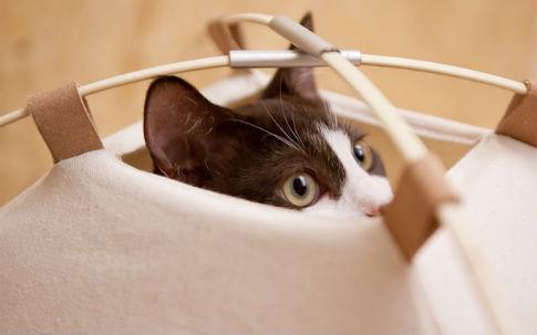 猫ちゃんのニーズにぴったりのテント