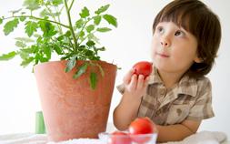 ガーデニング初心者におすすめ野菜栽培・家庭菜園キット。採れたてって楽しい!