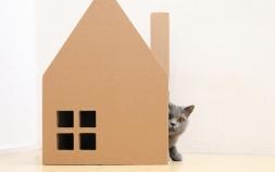 世界の猫ちゃんハウス