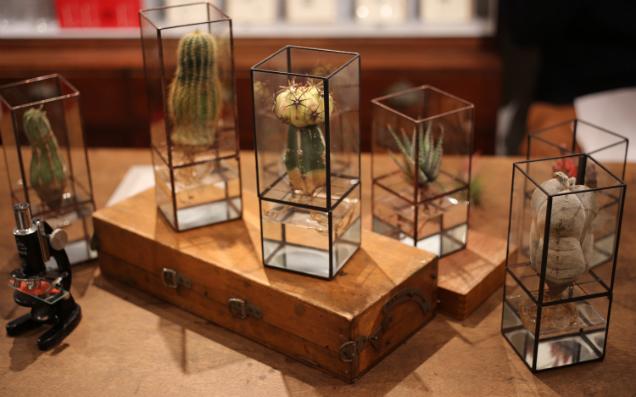 植物のアートを身近に置く「1012 | TERRA」