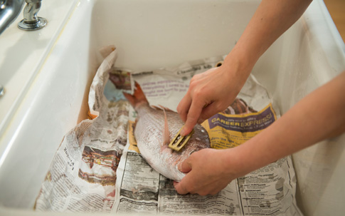 ウロコは食感が悪くなるので、念入りに処理していきます。魚が手の熱でぐったりしないように手早く!