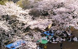 話題のスーパー「福島屋」で絶品お花見グルメを揃える
