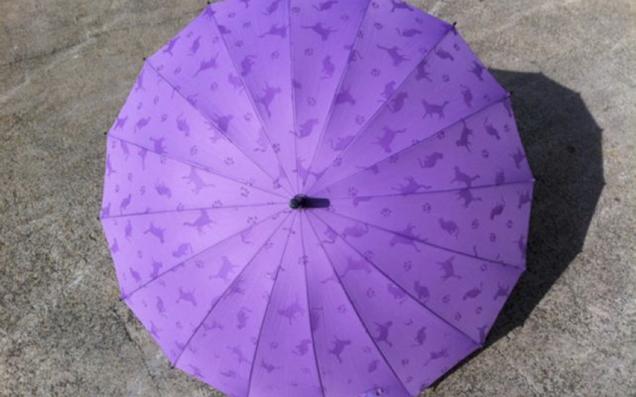 雨の日にだけ会える! おしゃれでちょっと不思議な傘